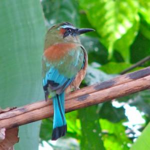 Nicaragua Urlaub 11