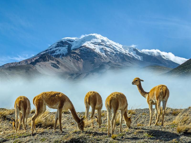 Ecuador Individualreise